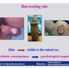 INDIA-1-2012_Pagina_21
