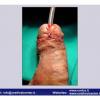 INDIA-3-2012_Pagina_51