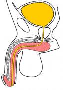 anatomia01