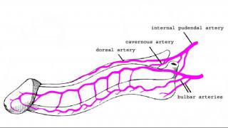 anatomia08