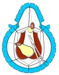 anastomosi2