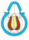 mucosa6